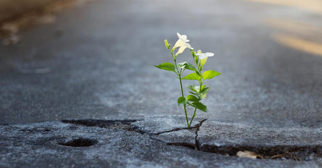 Resiliencia: ¿Qué es y cómo desarrollarla? - Terapify